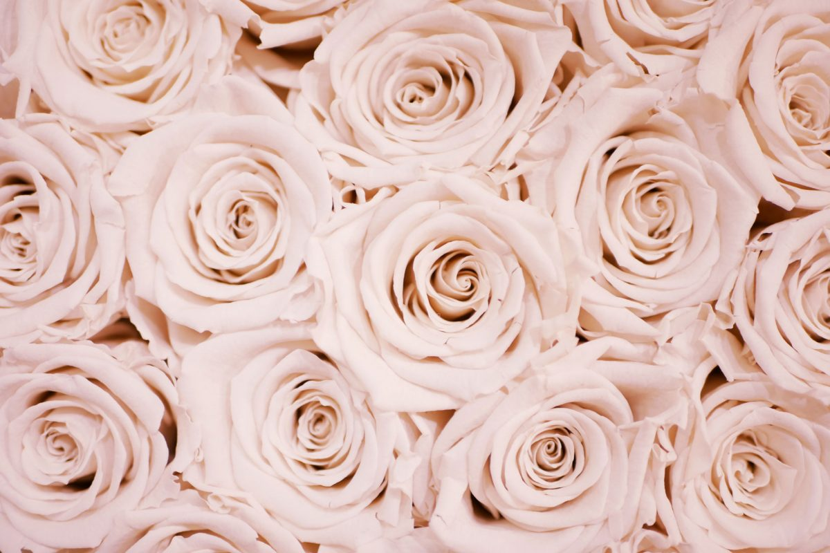 roses Photo by Lauza Loistl on Unsplash