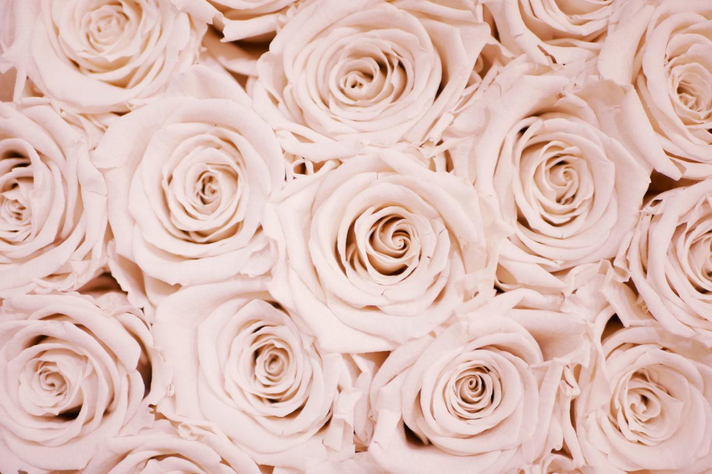 roses Photo by Lauza Loistl on Unsplash
